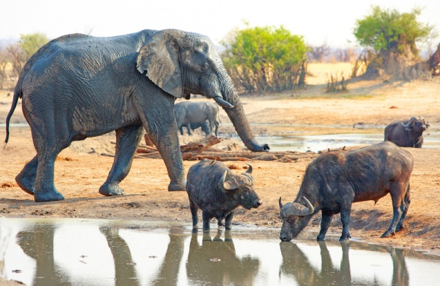 Hwange Big Five, Зимбабве -